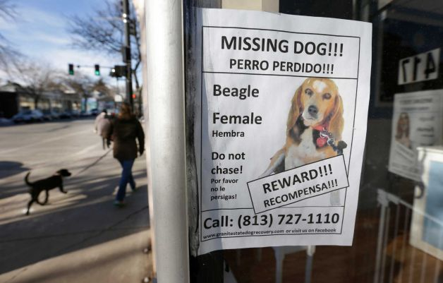 missing dog flyer example